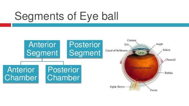 Anterior chamber eye ball diagram free download wiring diagram anatomy of the eye 6 segments of eye ball anterior segment eye of the anterior chamber eyesight diagram ccuart Gallery