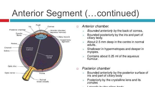 Anterior chamber eye ball diagram free download wiring diagram anatomy of the eye anterior chamber eye ball diagram 9 eye of the anterior chamber eyesight diagram ccuart Gallery