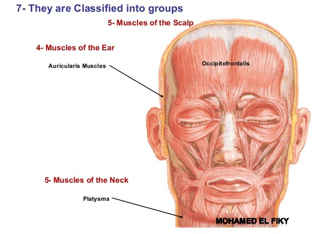 Anatomy Of The Face Face