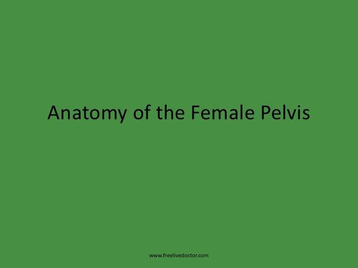 Anatomy of the Female Pelvis<br />www.freelivedoctor.com<br />