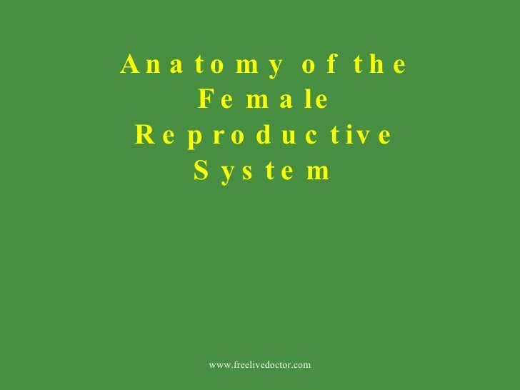 Anatomy of the Female Reproductive System   www.freelivedoctor.com