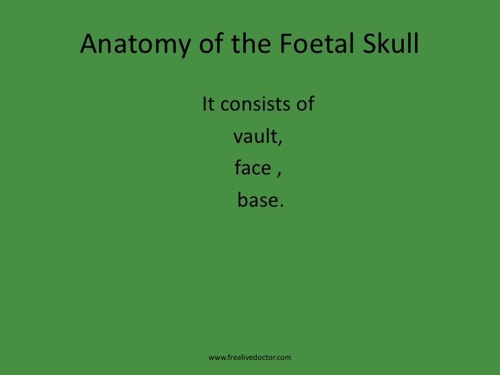 Anatomy Of The Foetal Skull