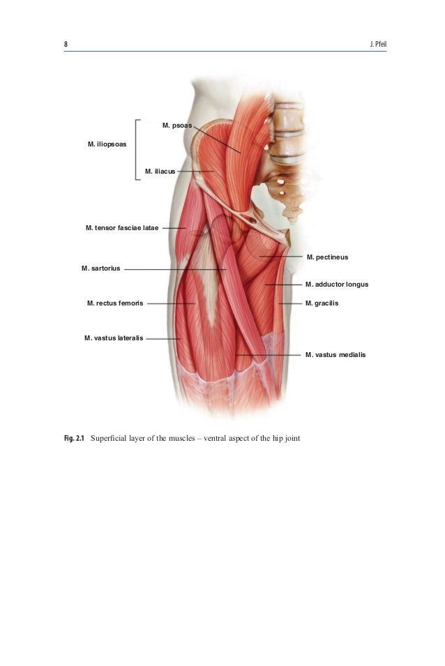 Beste M. Iliopsoas Fotos - Menschliche Anatomie Bilder ...