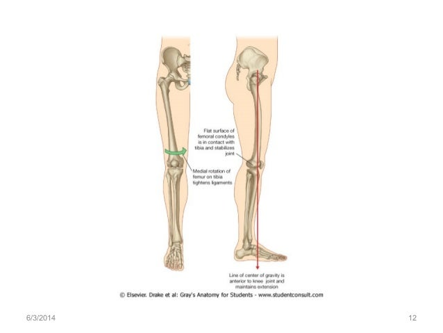 Anatomy of the knee joint 632014 12 ccuart Gallery