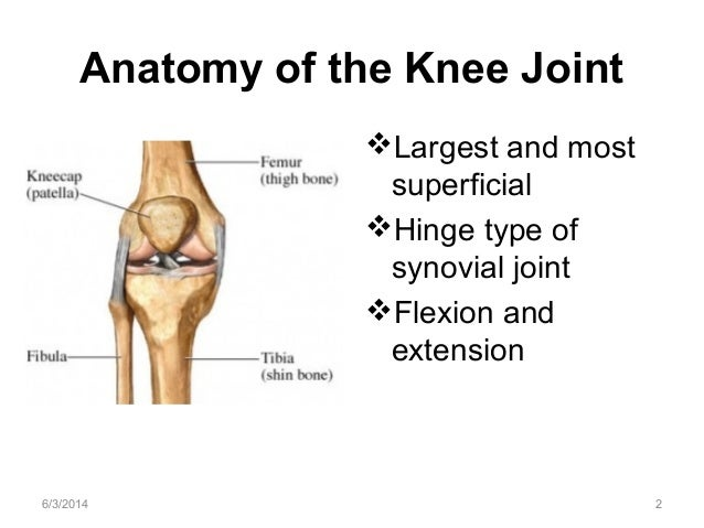 Anatomy of the knee joint 2 638gcb1398563934 anatomy of the knee joint largest and most superficial hinge type of synovial joint ccuart Choice Image