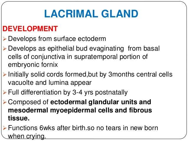 Anatomy Of The Lacrimal Apparatus