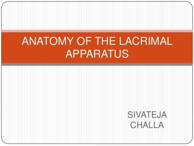 SIVATEJA CHALLA ANATOMY OF THE LACRIMAL APPARATUS