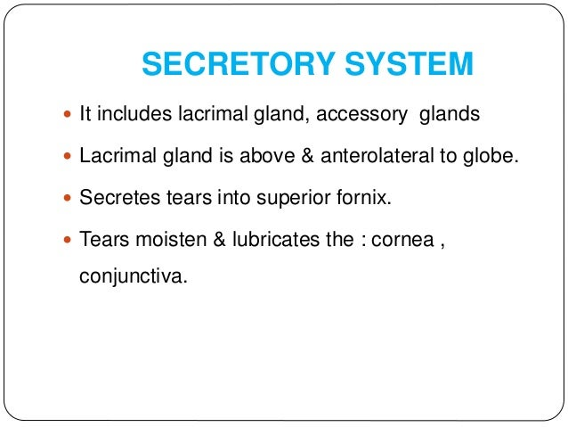 LACRIMAL GLAND DEVELOPMENT  Develops from surface ectoderm  Develops as epithelial bud evaginating from basal cells of c...
