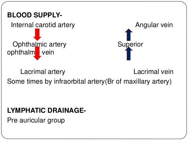 NERVE SUPPLY  Parasympathetic secretomotor fibres(efferent) from superior salivatory nucleus  Sympathetic nerve supply f...