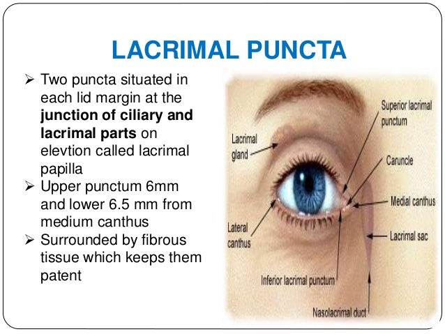 LACRIMAL CANALICULI  2 in number,Joins puncta to lacrimal sac  Two parts vertical(2mm) and horizontal(8mm) at junction d...