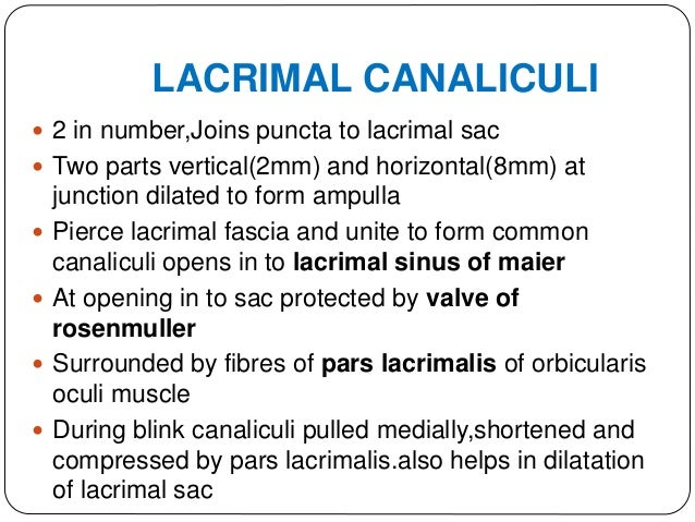 LACRIMAL SAC  Upper expanded portion of NLD  Lodged in lacrimal fossa(medial wall is lamina papyracea,formed by lacrimal...
