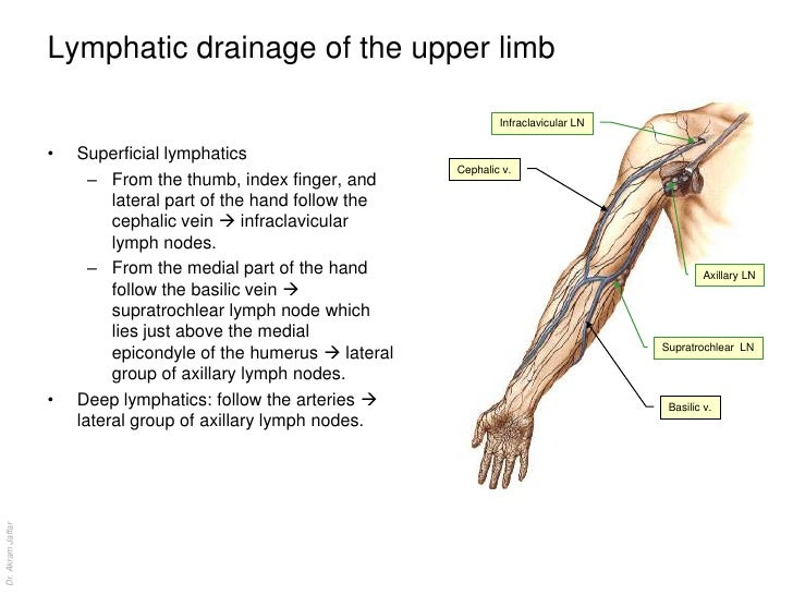 anatomy of the lymphatic system, Cephalic Vein