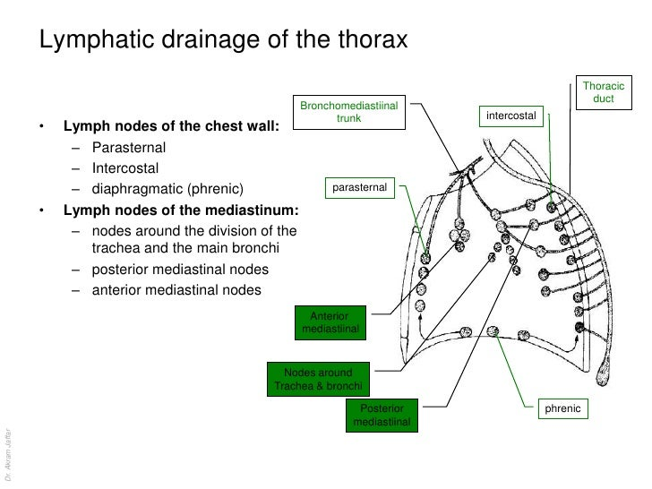 Anatomy of the lymphatic system lymphatic ccuart Images