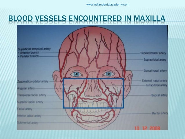Anatomy of the maxilla and its surgical implications /cosmetic dentis…