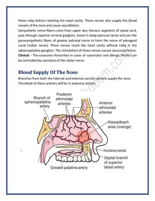 Anatomy of the Nose | SurgicoMed.com