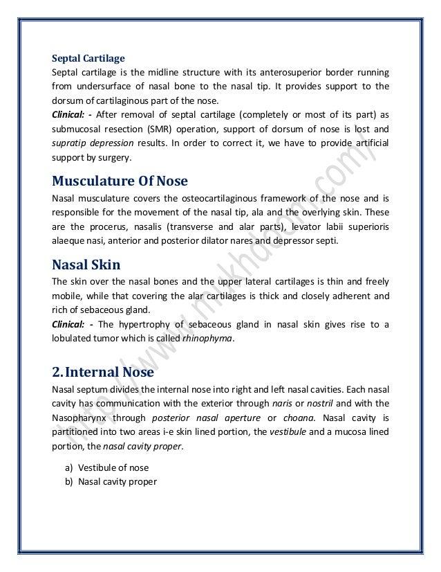 Anatomy of the Nose   SurgicoMed.com