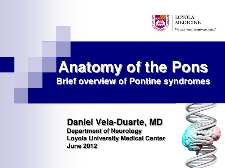 Anatomy of the PonsBrief overview of Pontine syndromes  Daniel Vela-Duarte, MD  Department of Neurology  Loyola University...