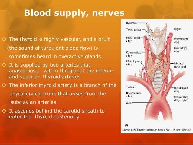 Anatomy of thyroid and parathyroid glands