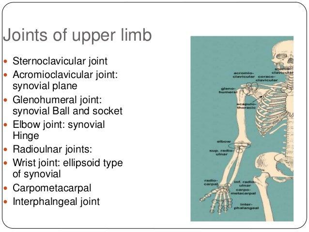 Anatomy Of Upper Limb Rehan