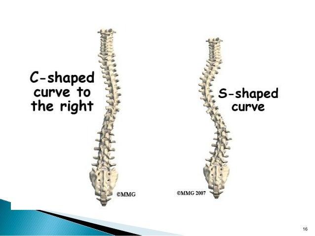 Anatomy Of Vertebral Column
