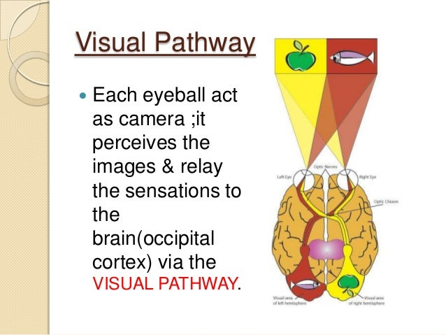Anatomy of visual pathway, field defects and its lesions.