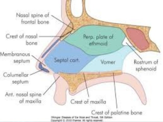 Anatomy and physiology of nose and paranasal sinuses