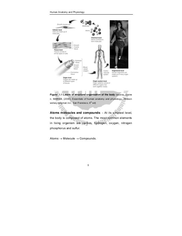 Anatomy Physiology Book (PDF)