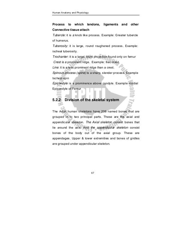 Anatomy physiology book pdf 77 human anatomy and physiology fandeluxe Gallery