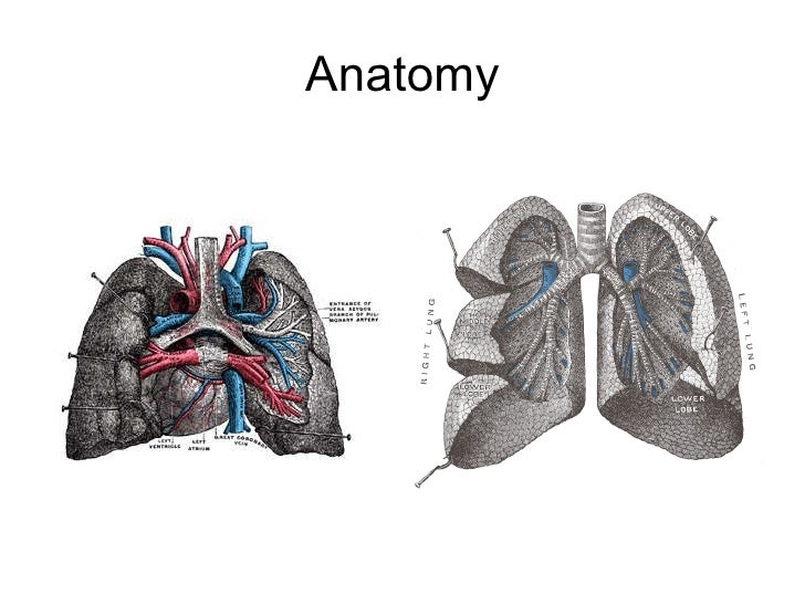 Vistoso Anatomy Physiology And Pathology Online Courses Foto ...