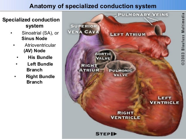 Anatomy Physiology For The Ep Professional Part Ii 8414