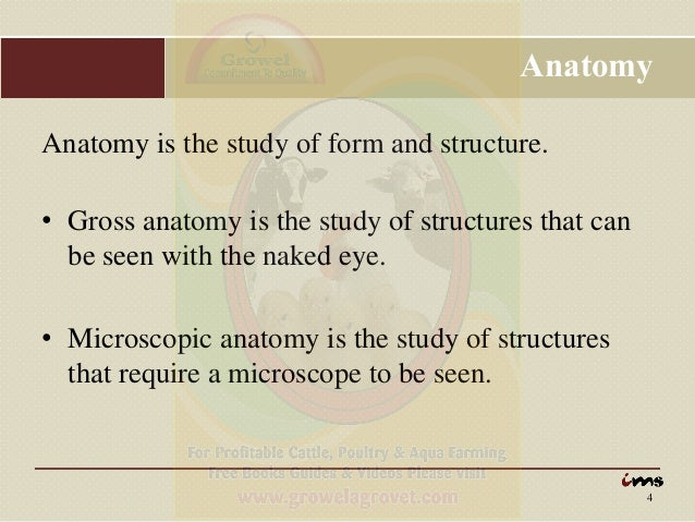 Anatomy & Physiology of Animals