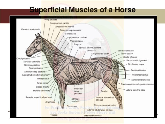 Anatomy Physiology Of Animals
