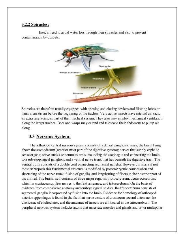 Anatomy & physiology of arthropods