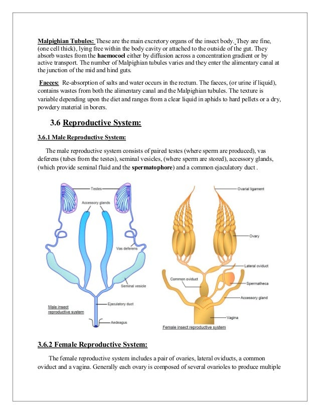 Anatomy physiology of arthropods 20 ccuart Image collections