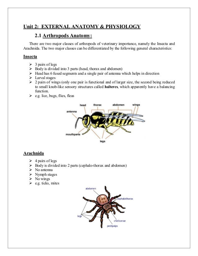 Anatomy Physiology Of Arthropods