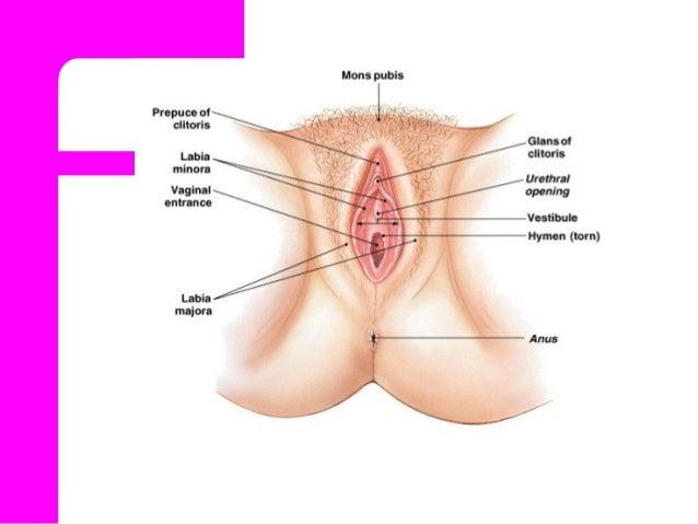 vagina tube