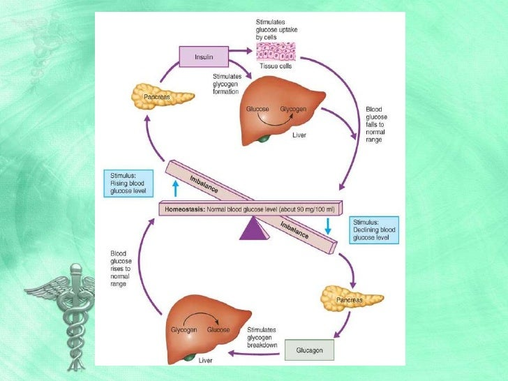 Perfecto Diabetes Mellitus Anatomy And Physiology Bandera - Anatomía ...
