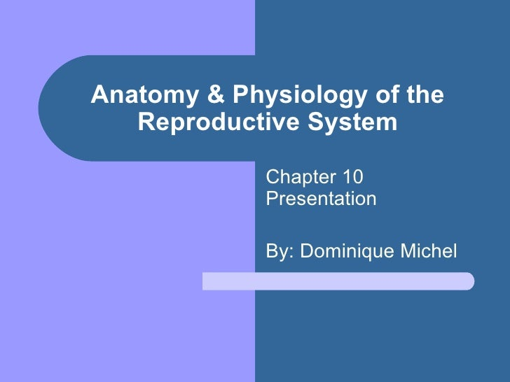 Anatomy & Physiology of the Reproductive System Chapter 10 Presentation By: Dominique Michel