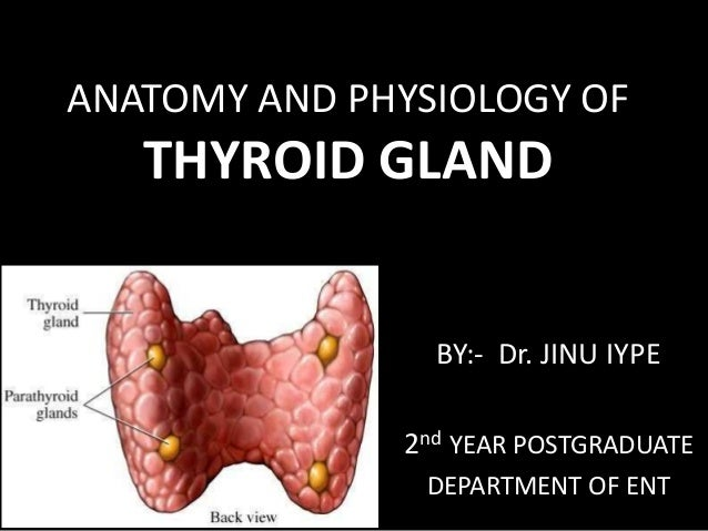 Anatomy Physiology Of Thyroid Gland