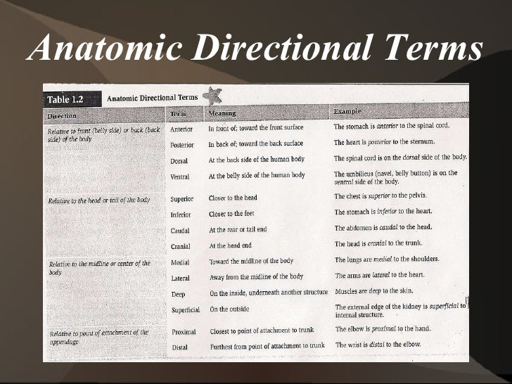 Anatomical Directional Terms Examples