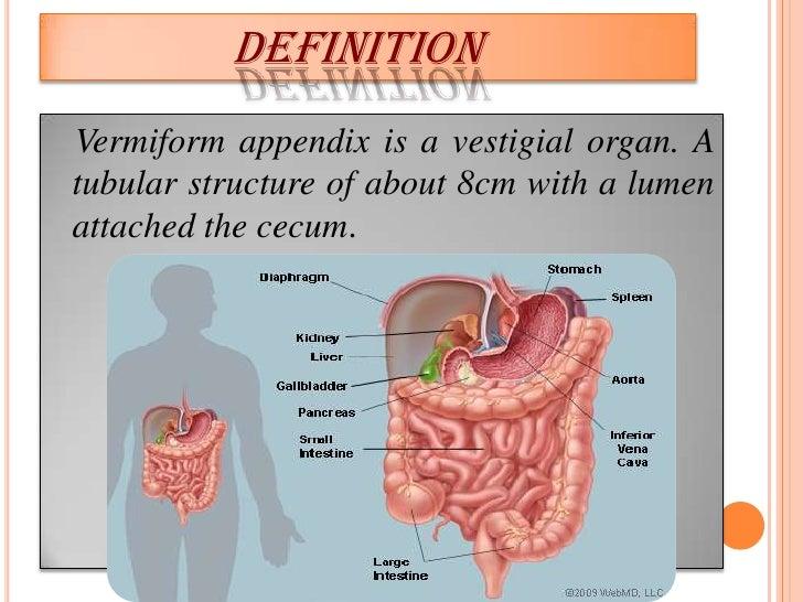Anatomy presentation