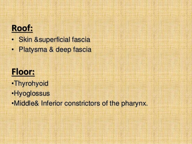 Anatomy Project