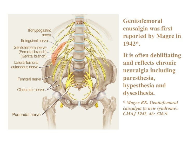 Anatomy and Related Etiology of Groin Pain