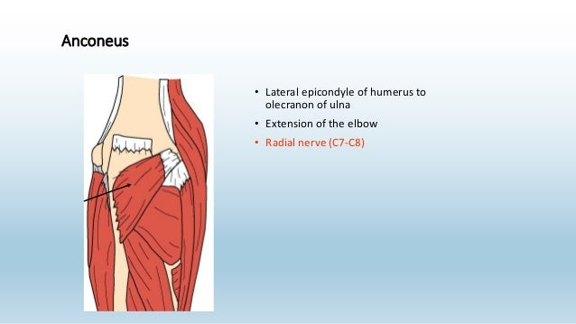 anatomy revision 2