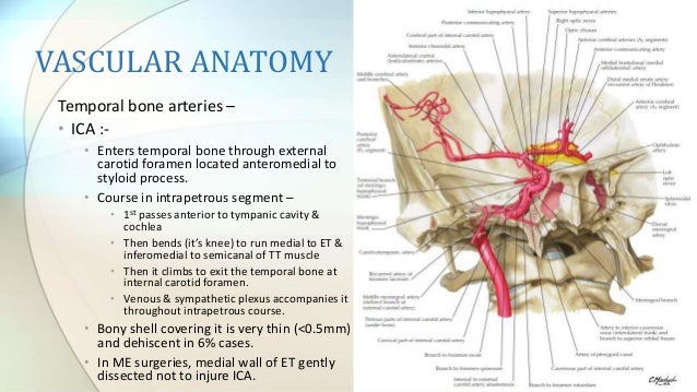 Anatomy of temporal bone