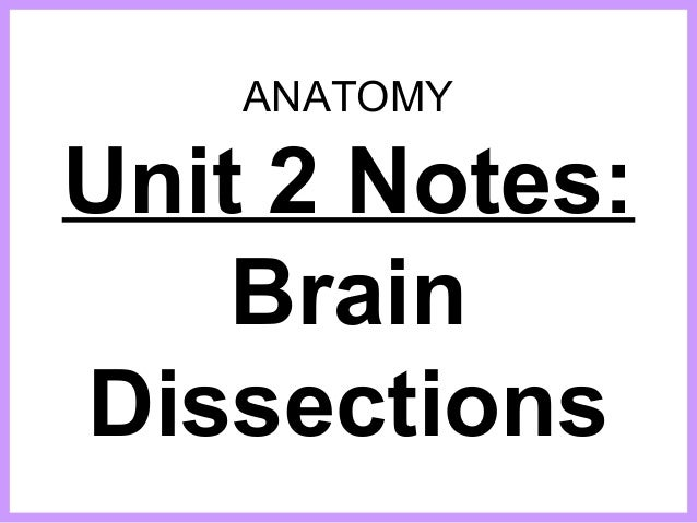 ANATOMY Unit 2 Notes: Brain Dissections