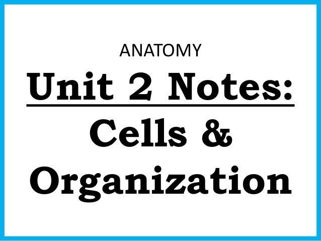 ANATOMY Unit 2 Notes: Cells & Organization