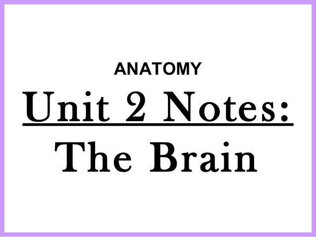 ANATOMY Unit 2 Notes: The Brain