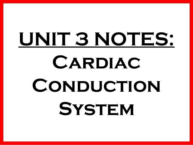 UNIT 3 NOTES: Cardiac Conduction System