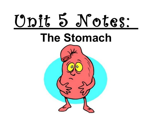 Unit 5 Notes: The Stomach